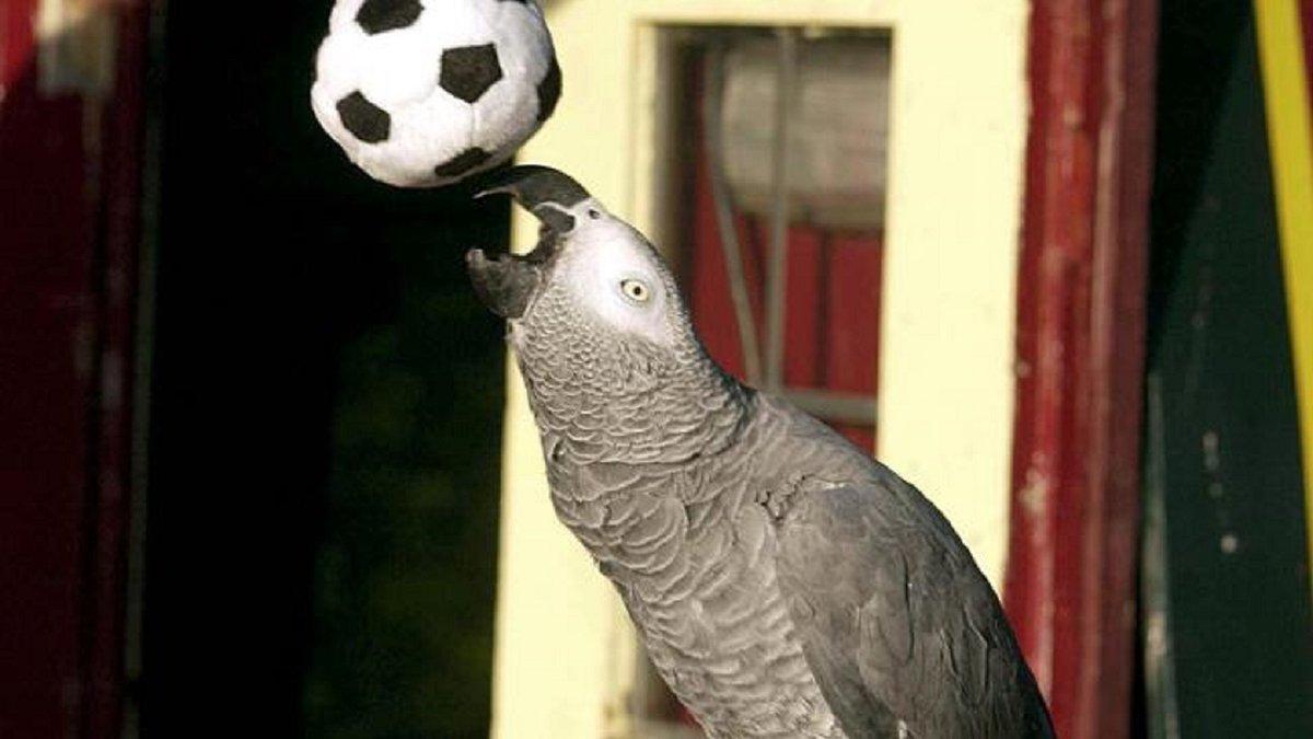Попугай чуть не сорвал матч женской сборной Бразилии – футболистку спасали мячом