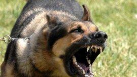 """Собака перервав матч """"Партизана"""" із сербським аутсайдером - не на фарт (ВІДЕО)"""