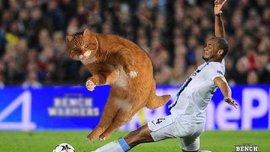 Котінью – футбольний мем, який стрімко підірвав соцмережі