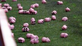 Фанати викинули на поле сотні свиней і зупинили матч у третьому англійському дивізіоні