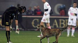 Собака двічі завадив провести небезпечну атаку в матчі Суднобудівник – Дніпро