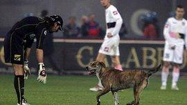 Собака дважды помешала провести опасную атаку в матче Судостроитель – Днепр