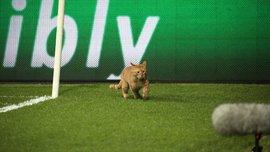 Рудий кіт перервав матч Бешикташ – Баварія