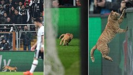 Бешикташ – Баварія: Турки можуть бути покарані УЄФА через кота, який вибіг на поле