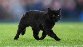 Черный кот приостановил матч Эвертона и Вулверхэмптона – курьез дня с АПЛ