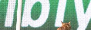 УЄФА оштрафував Бешикташ за кота, що вибіг на поле