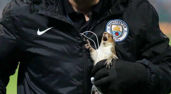 Белка выбежала на поле перед матчем Манчестер Сити – Вулверхэмптон
