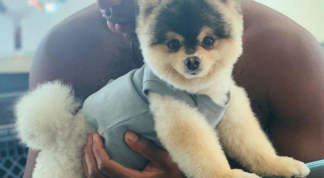 У Старріджа вкрали собаку – гравець обіцяє заплатити будь-які гроші