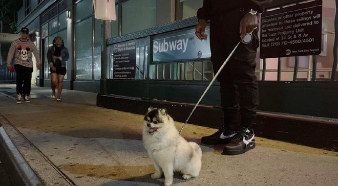Поліція знайшла собаку Старріджа – пес був викрадений під час пограбування будинку футболіста