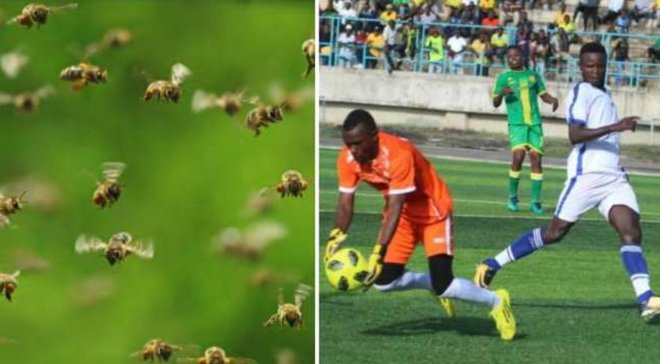 Рой пчел прервал матч чемпионата Танзании